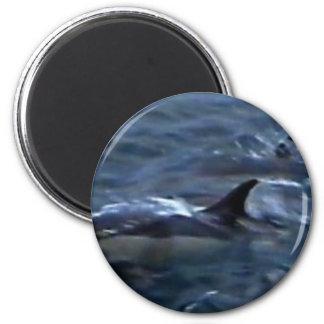 Delfínes en el boatside imán redondo 5 cm