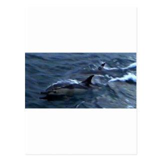Delfínes en el boatside postales