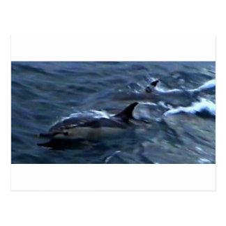 Delfínes en el boatside tarjetas postales