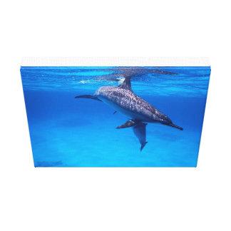 Delfínes en el juego lienzo envuelto para galerias