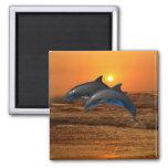 Delfínes en la puesta del sol imanes para frigoríficos