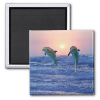 Delfínes en la salida del sol imán cuadrado