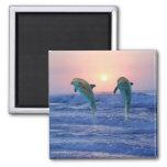 Delfínes en la salida del sol iman de nevera