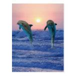 Delfínes en la salida del sol postales