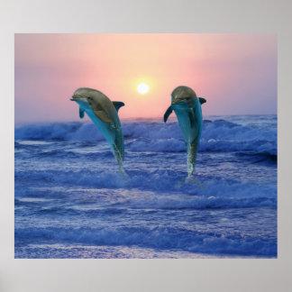 Delfínes en la salida del sol póster