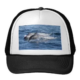 Delfínes Gorra