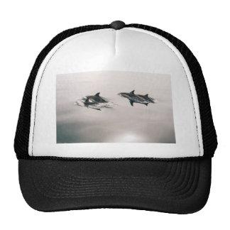 Delfínes Gorro