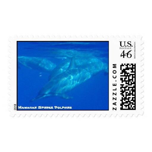 Delfínes hawaianos del hilandero sello