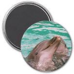 Delfínes Imán De Frigorifico