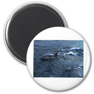 Delfínes Imán Redondo 5 Cm