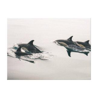 Delfínes Impresiones En Lienzo Estiradas