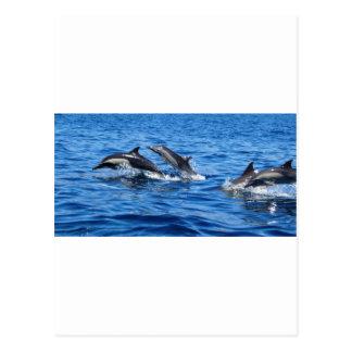 Delfínes juguetones postal