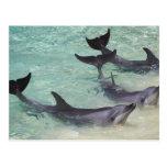 Delfínes, mundo del mar, Gold Coast, Queensland, Tarjetas Postales