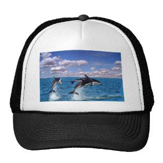 Delfínes oscuros en el juego gorras