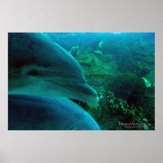 Delfínes Impresiones