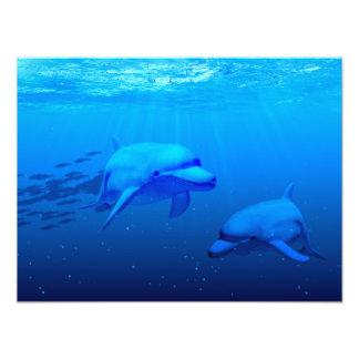 Delfínes Fotografía