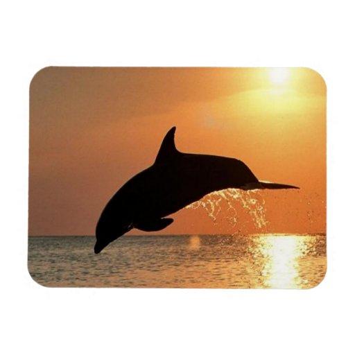Delfínes por puesta del sol imán flexible