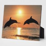 Delfínes por puesta del sol placa