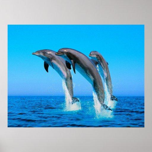 Delfínes Posters