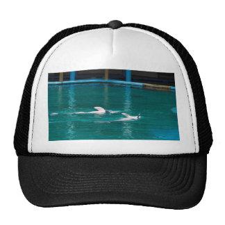 Delfínes que nadan upside-down como parte de la gorras