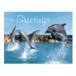 Delfínes que nadan y que hacen trucos postales