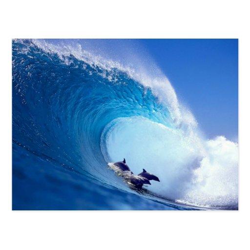 Delfínes que practican surf postal