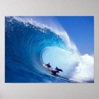 Delfínes que practican surf póster