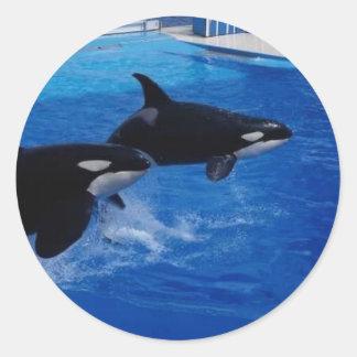 Delfínes salvajes de los animales pegatina redonda