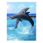 Delfínes Tarjeta Postal