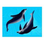 Delfines Tarjetas Postales