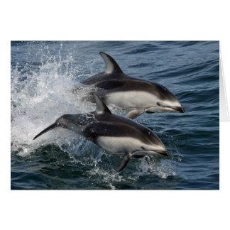 Delfínes toda la ocasión tarjeta de felicitación