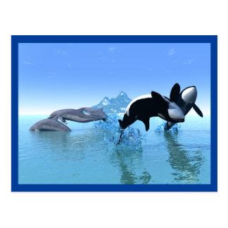 Delfínes y la postal de la orca