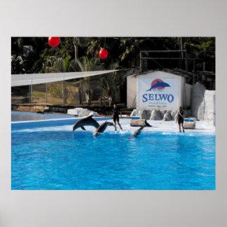 Delfínes y sus instructores en el parque marino de poster