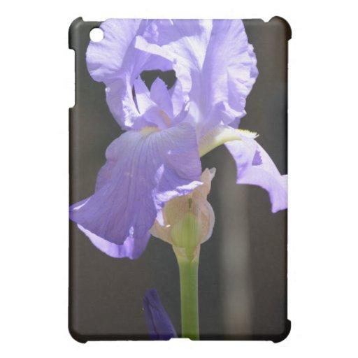 Delicado púrpura