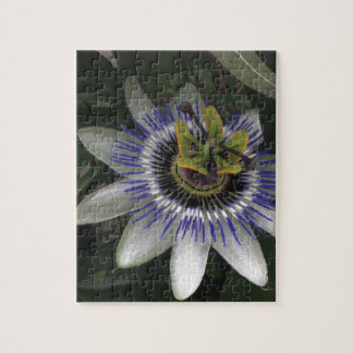 Delicate and Beautiful Passiflora Flower Jigsaw Puzzle