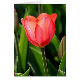 Delicate Back Lit Pink Tulip Card