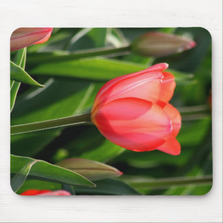 Delicate Back Lit Pink Tulip Mouse Pad