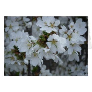 """Delicate Blossoms"" Card"