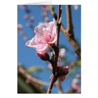 Delicate Buds of Peach Tree Blossom Greeting Card