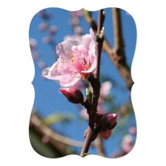 Delicate Buds of Peach Tree Blossom Card
