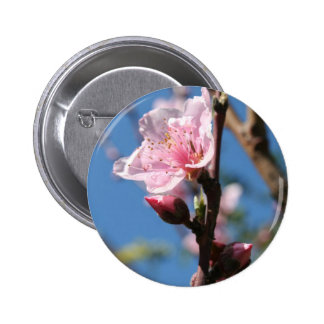 Delicate Buds of Peach Tree Blossom Pins