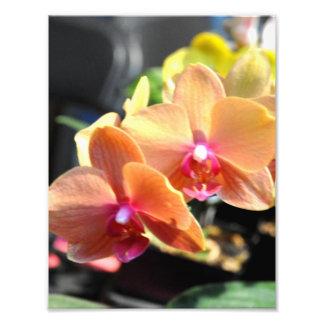 Delicate cream orchids photo print