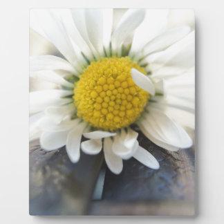 Delicate daisy plaque