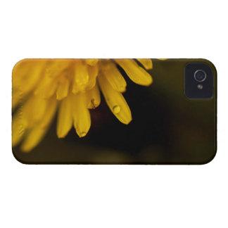 Delicate Dandelion iPhone 4 Cases