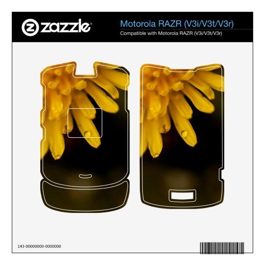 Delicate Dandelion Decal For Motorola RAZR