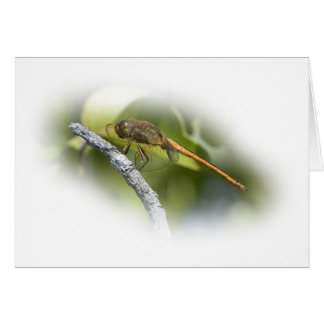Delicate Dragonfly Card
