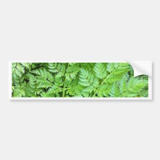 Delicate Ferns Bumper Sticker
