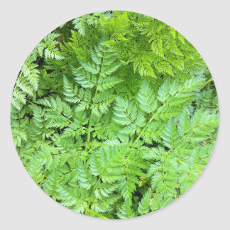 Delicate Ferns Classic Round Sticker