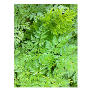 Delicate Ferns Postcard
