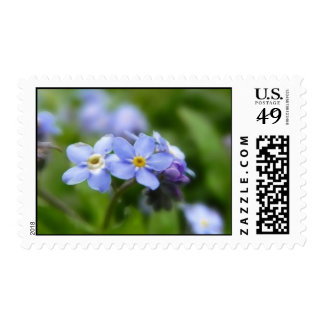 Delicate Forget Me Not Flowers Postage Stamp